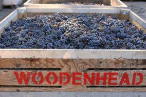 Woodenhead Wine Tasting @ Surf Market   Gualala   CA   United States